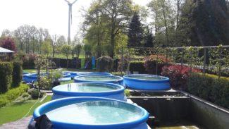 specialist renovatie zwemvijver ollevier en co