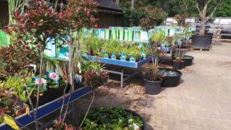 uitgebreid gamma filterplanten voor waterplanten, moerings