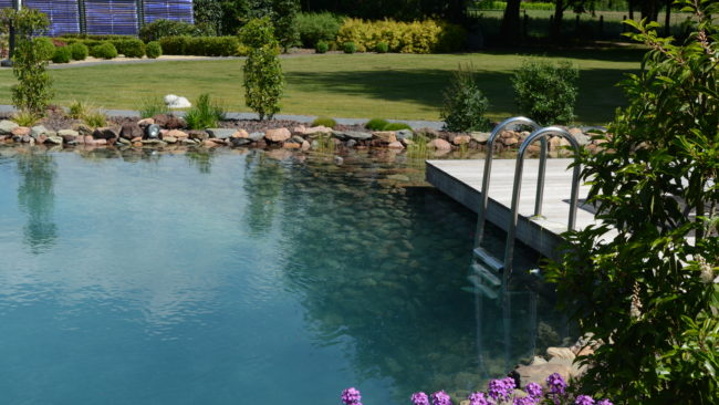 helder water zwemmen vijver ollevier en co